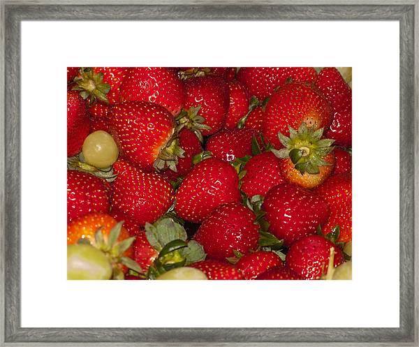 Strawberries 731 Framed Print