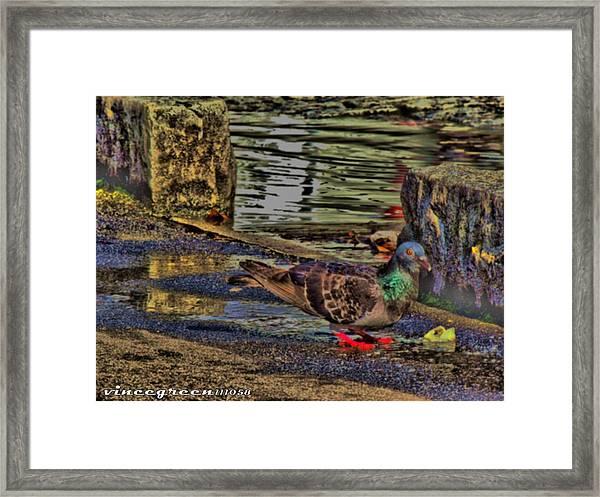 Street Walker Framed Print