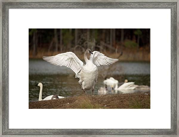 Stretch Your Wings Framed Print