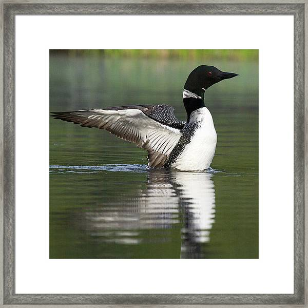 Stretching My Wings Framed Print