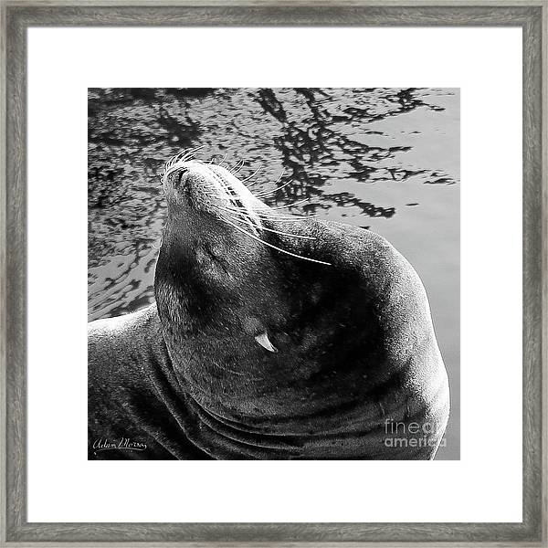 Stretch, Black And White Framed Print