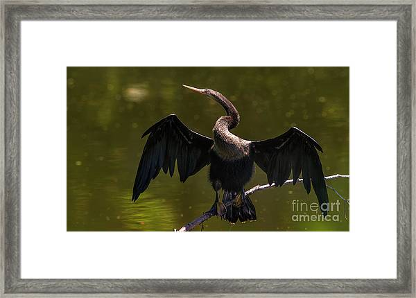 Framed Print featuring the photograph Strike A Pose by DJA Images