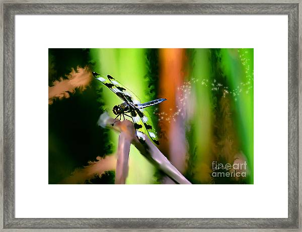 Striped Dragonfly Framed Print