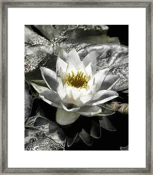 Strokes Of The Lily Framed Print