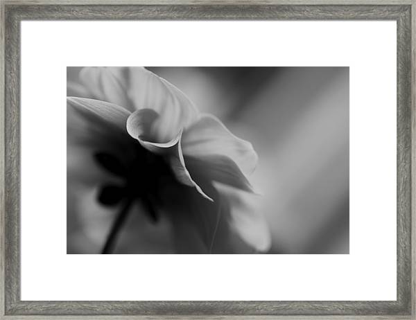 Strong Willed Framed Print