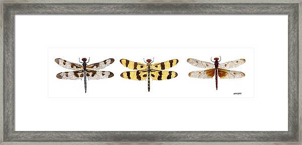 Study Of A Banded Pennant A Halloween Pennant And A Calico Pennant  Framed Print