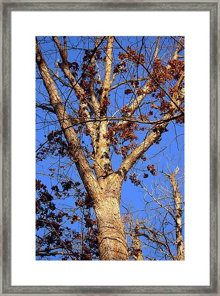 Stunning Tree Framed Print