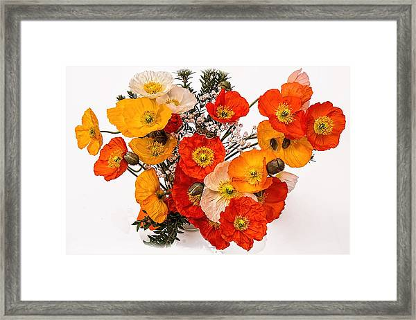Stunning Vibrant Yellow Orange Poppies  Framed Print