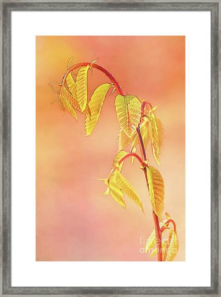 Stylized Baby Chestnut Leaves Framed Print
