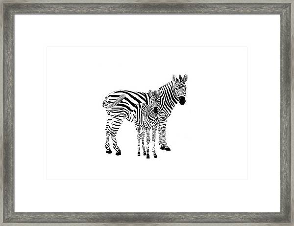 Stylized Zebra With Child Framed Print