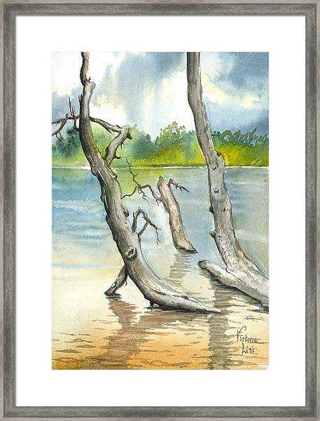 Submerged Cottonwood Framed Print