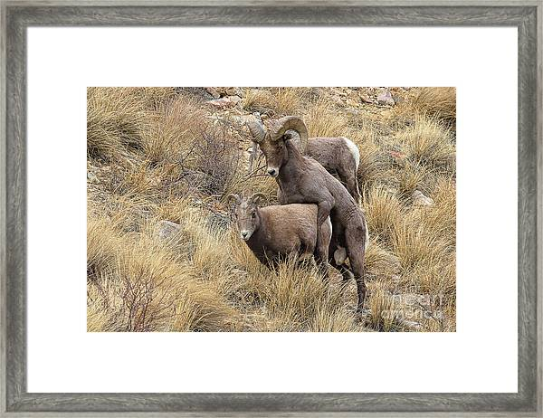 Committed To The Cause Framed Print