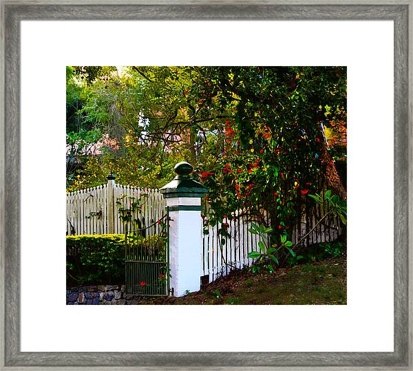 Subtropical Queensland Framed Print