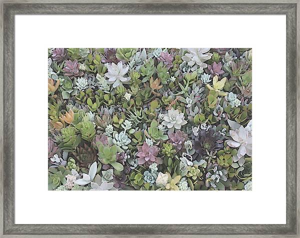 Succulent 8 Framed Print