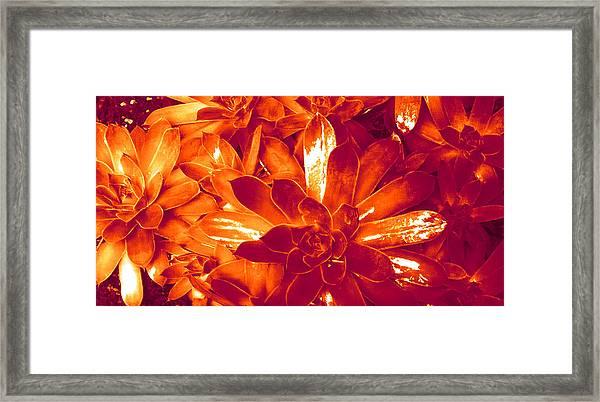 Succulents #1 Framed Print