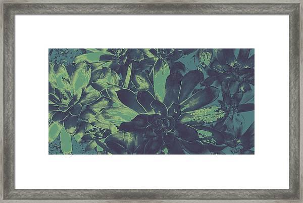 Succulents #2 Framed Print