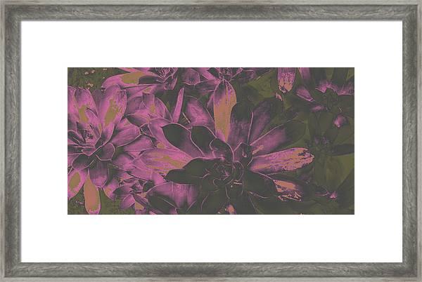Succulents #3 Framed Print