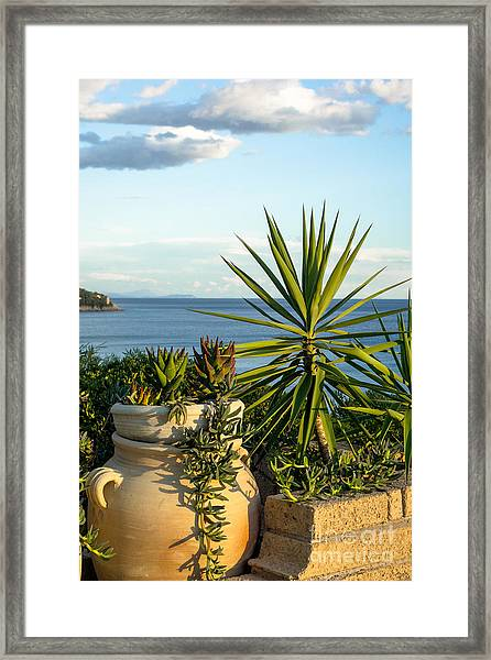 Succulents By The Sea Framed Print
