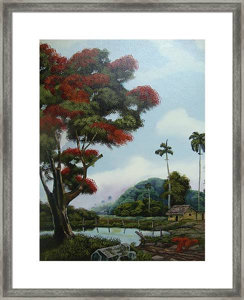 Sudden Shade Framed Print
