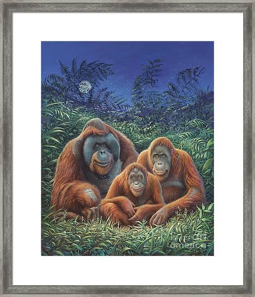 Sumatra Orangutans Framed Print