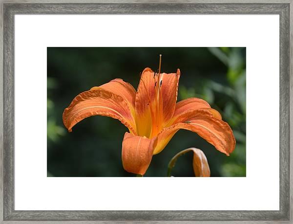 Summer Bloom-3 Framed Print