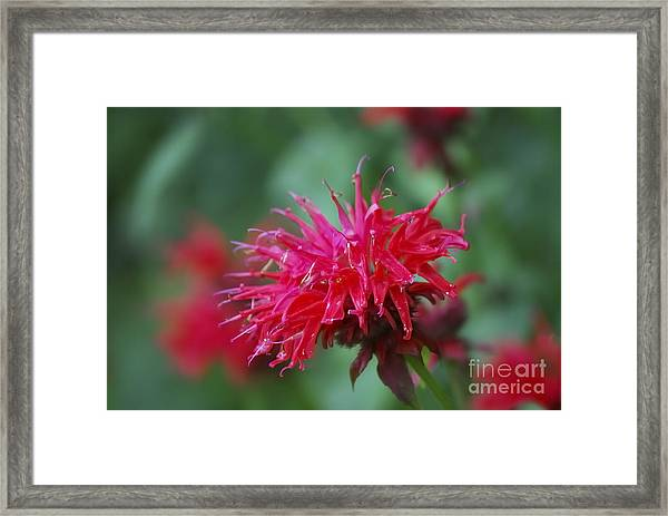 Summer Color Framed Print