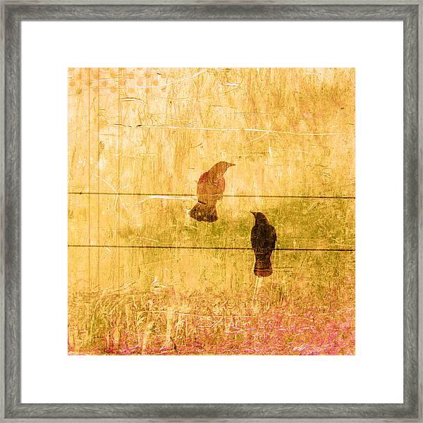Summer Crows Framed Print