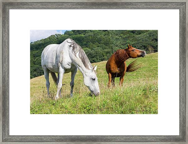 Framed Print featuring the photograph Summer Evening For Horses by D K Wall