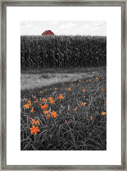 Framed Print featuring the photograph Summer Fields by Dylan Punke