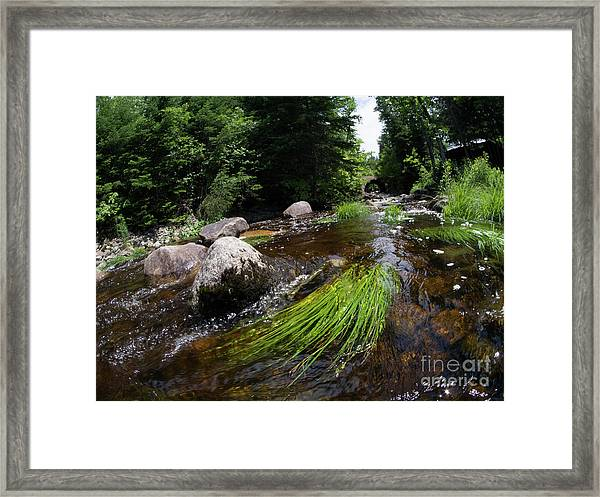 Summer Flow Of Water Near Rangeley Maine  -63322 Framed Print