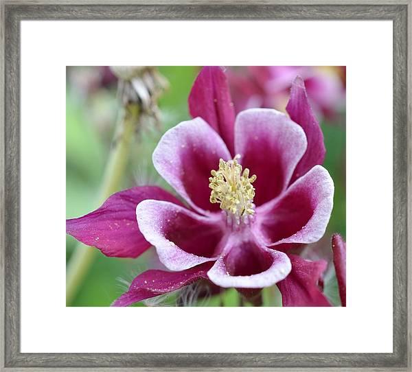 Summer Flower-2 Framed Print