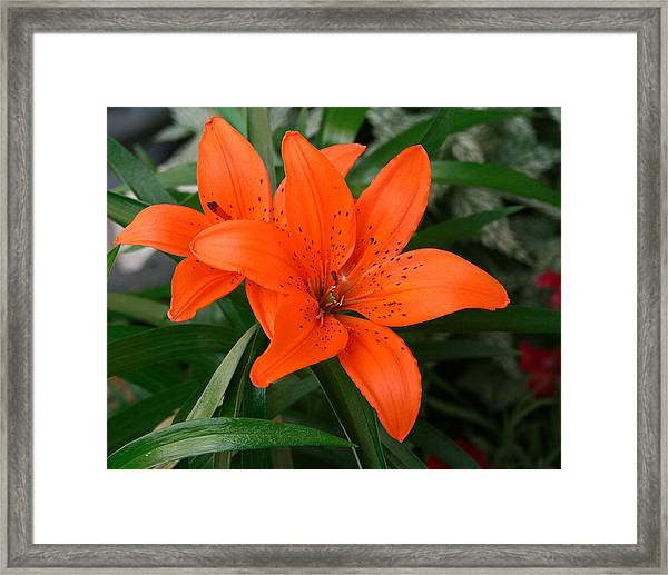 Summer Flower Framed Print