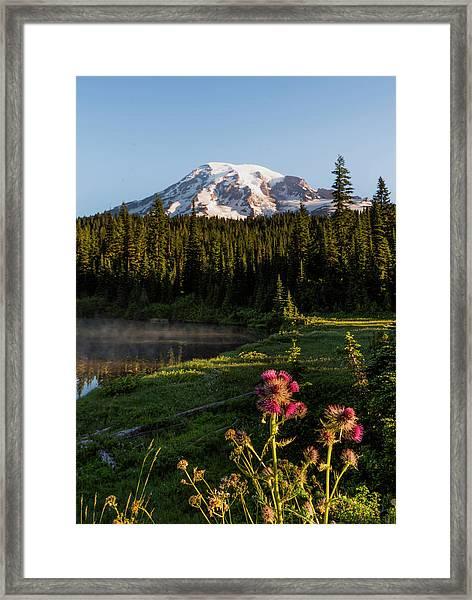 Summer Morning At Mt Rainier Framed Print