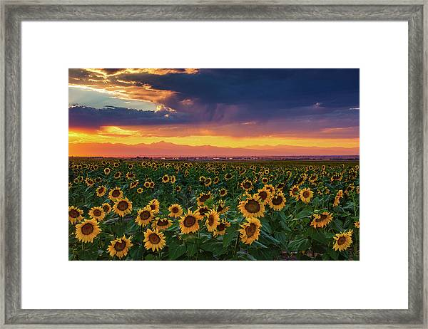 Framed Print featuring the photograph Summer Radiance by John De Bord