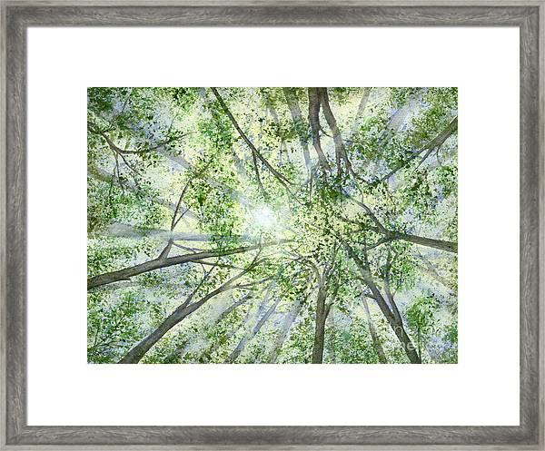 Summer Rays Framed Print