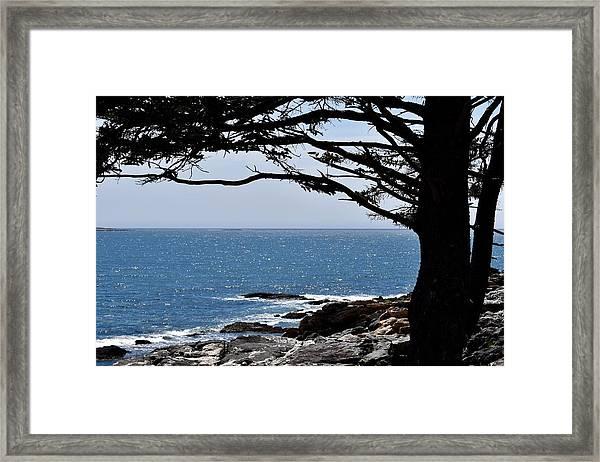 Summer Shade Framed Print