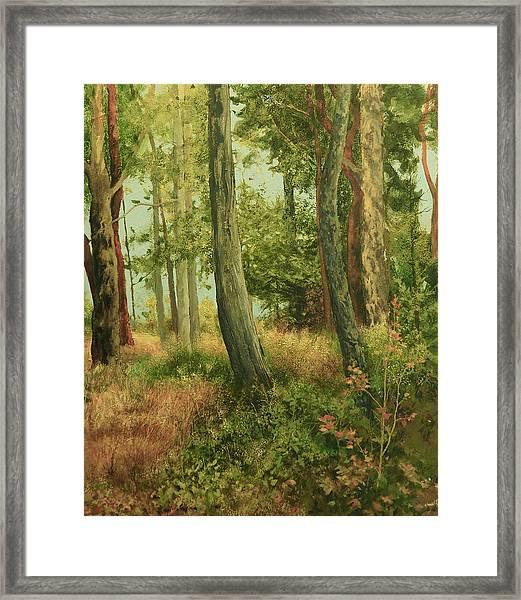 Summer, Sidney Spit Framed Print