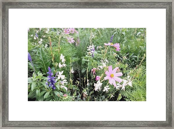 Summer Spray Framed Print