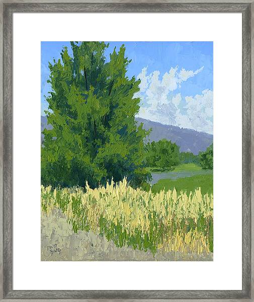 Summer Tree Framed Print