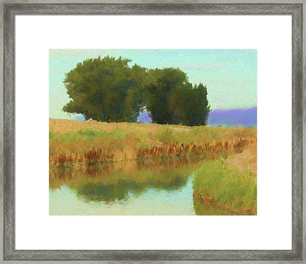 Summer Trees Framed Print