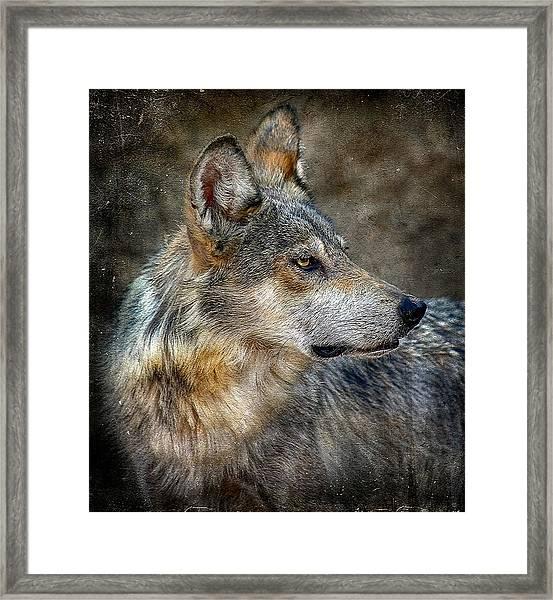 Summertime Coated Wolf Framed Print