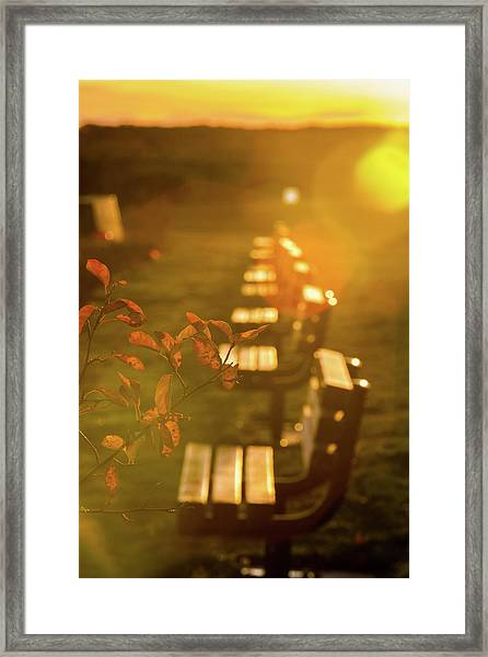 Sun Drenched Bench Framed Print