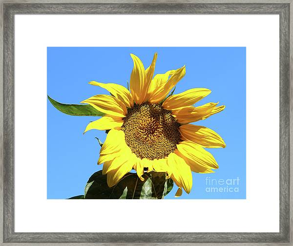 Sun In The Sky Framed Print