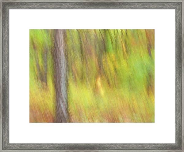 Sun Kissed Tree Framed Print