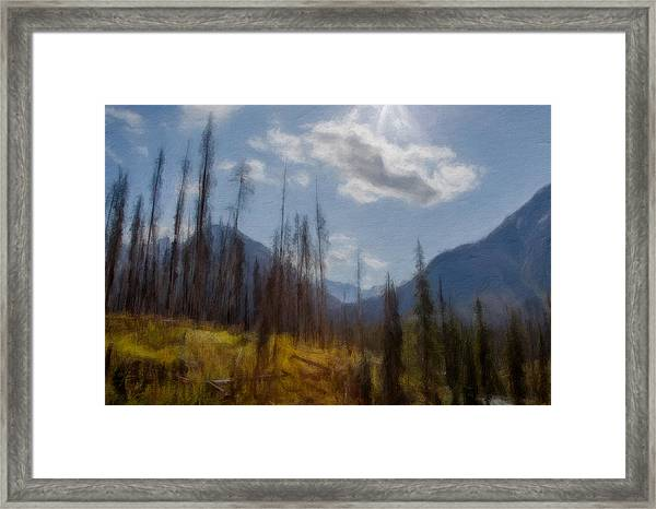 Sun Light In The Forest Framed Print