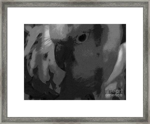 Sun Parakeet  Framed Print