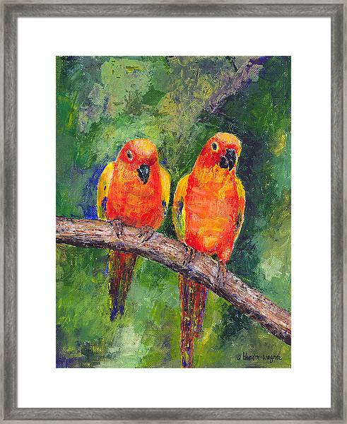 Sun Parakeets Framed Print