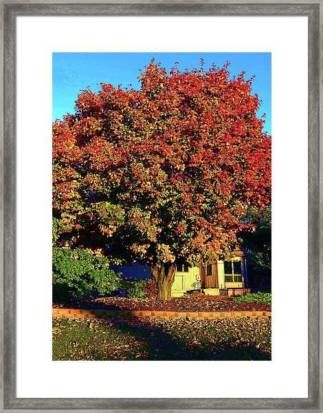 Sun-shining Autumn Framed Print