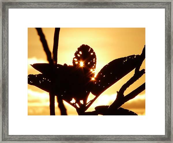 Sun Shining Through A Leaf Framed Print