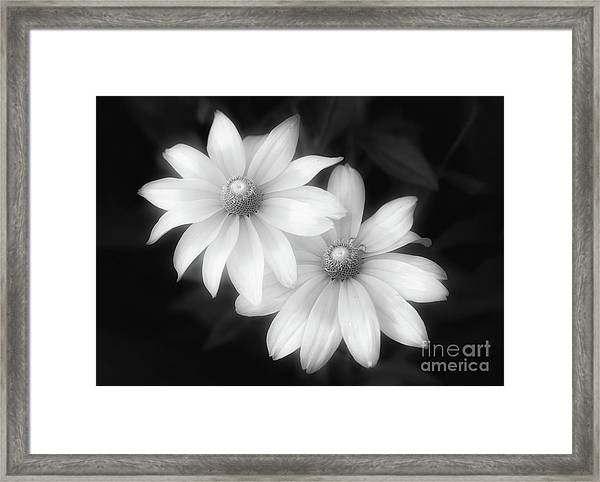Sun Sisters In Black And White Framed Print